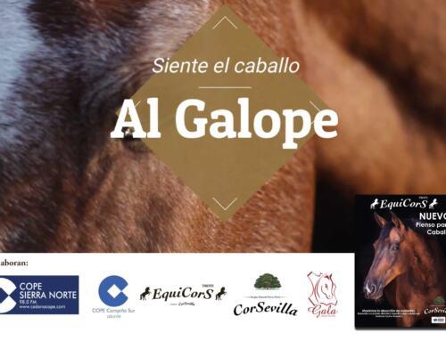 Programa 7 AL GALOPE